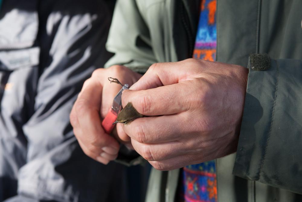 Vogelaars Engbert van Oort en Dick Jonkers zijn vandaag op Pampus!