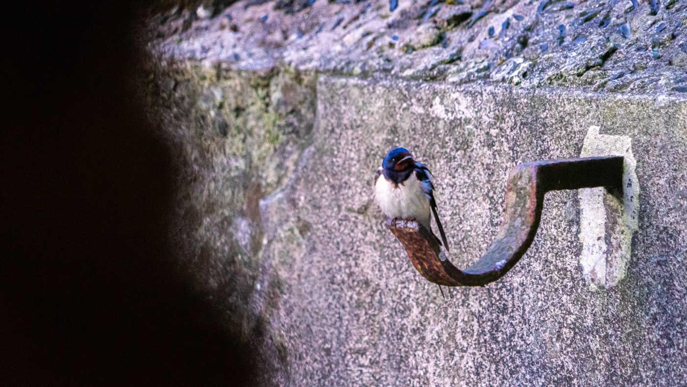 Eindeloos Pampus - vogeltje in fort