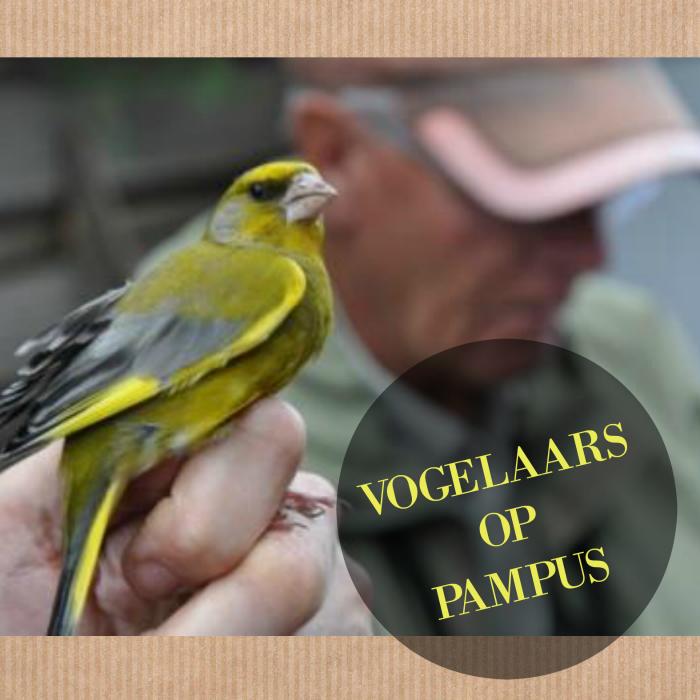 Vogelaars op Pampus